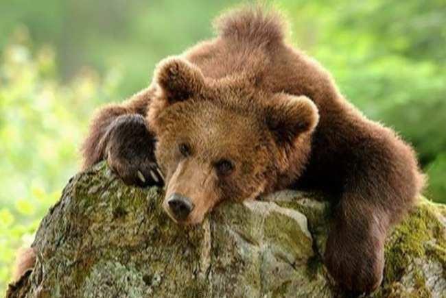 Путин Медведь ни у кого разрешения спрашивать не будет