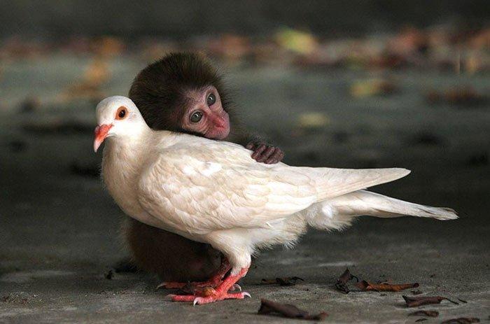 Трогательные фотоистории о дружбе между животными